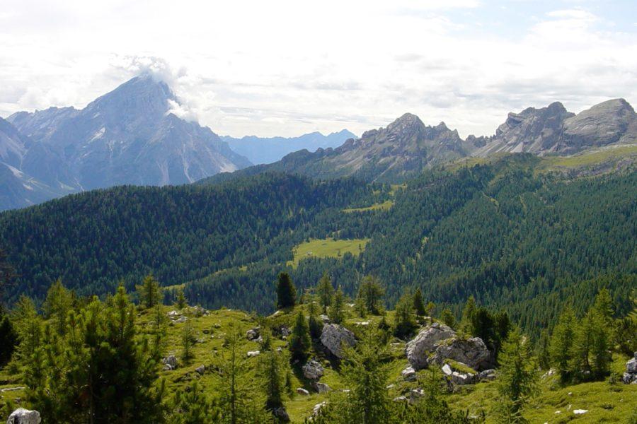 Come possiamo gestire le foreste in modo sostenibile?