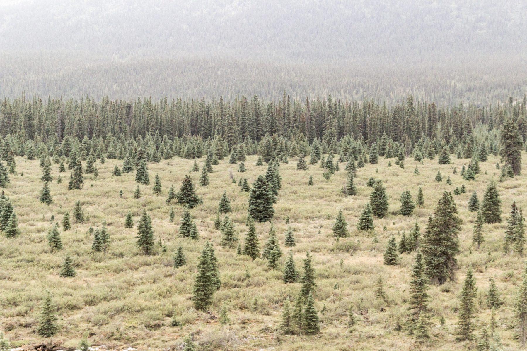 Quali sono le conseguenze degli eventi estremi sulle foreste montane?